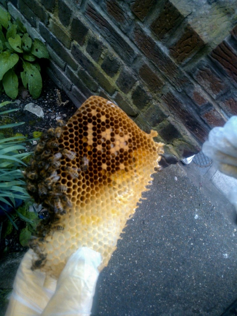 The London Bee Company Brood