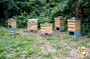 London Bee Company - Apiary