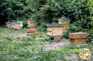 London Bee Company - Apiary 2